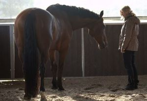 paard-politie